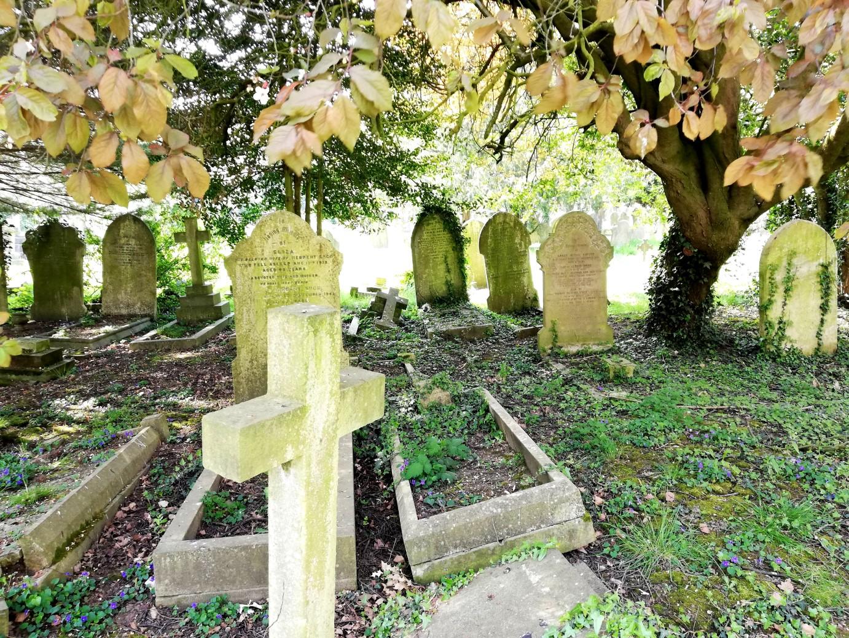 Gravestones under a tree
