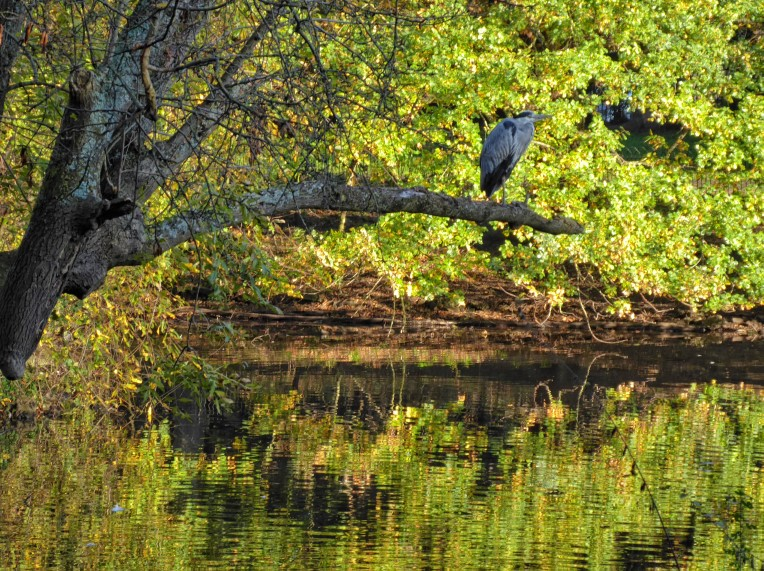 Heron in a tree by a lake