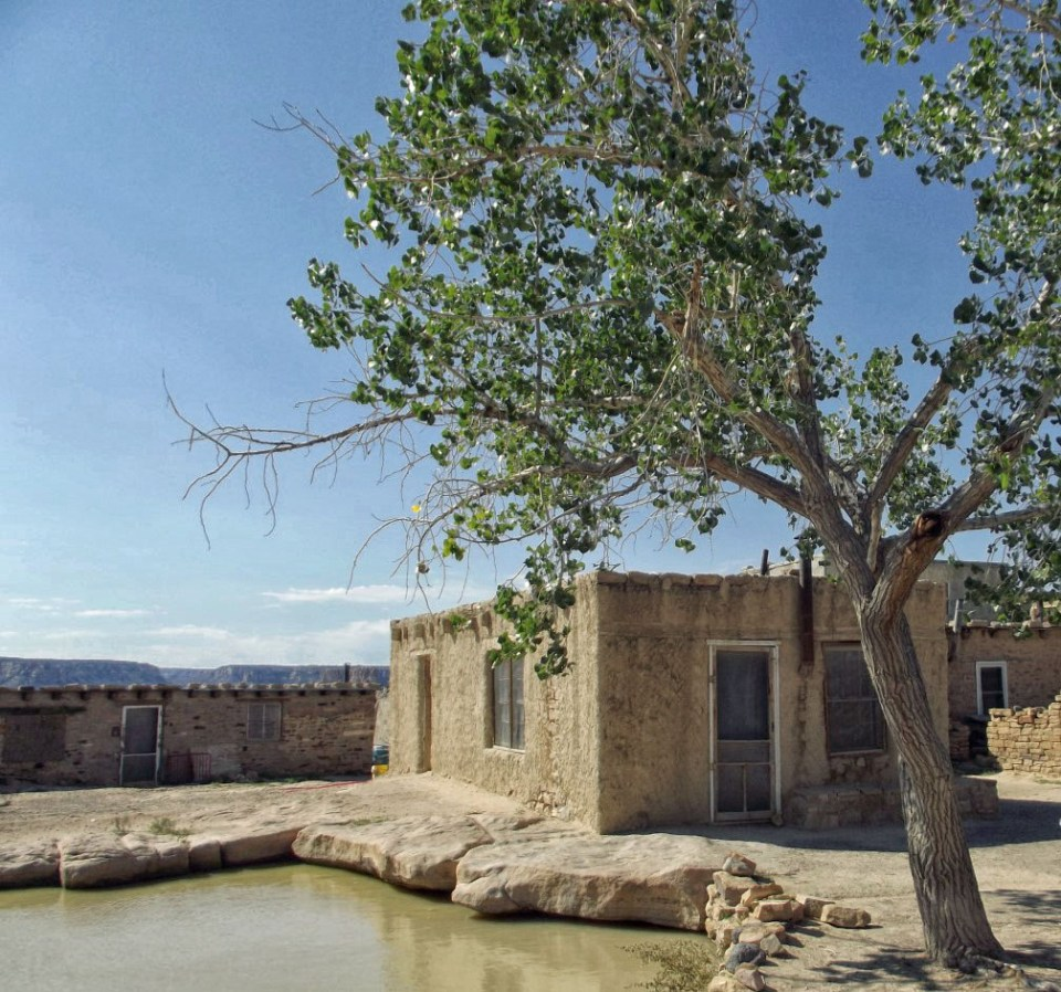 Pool of water with tree and adobe house