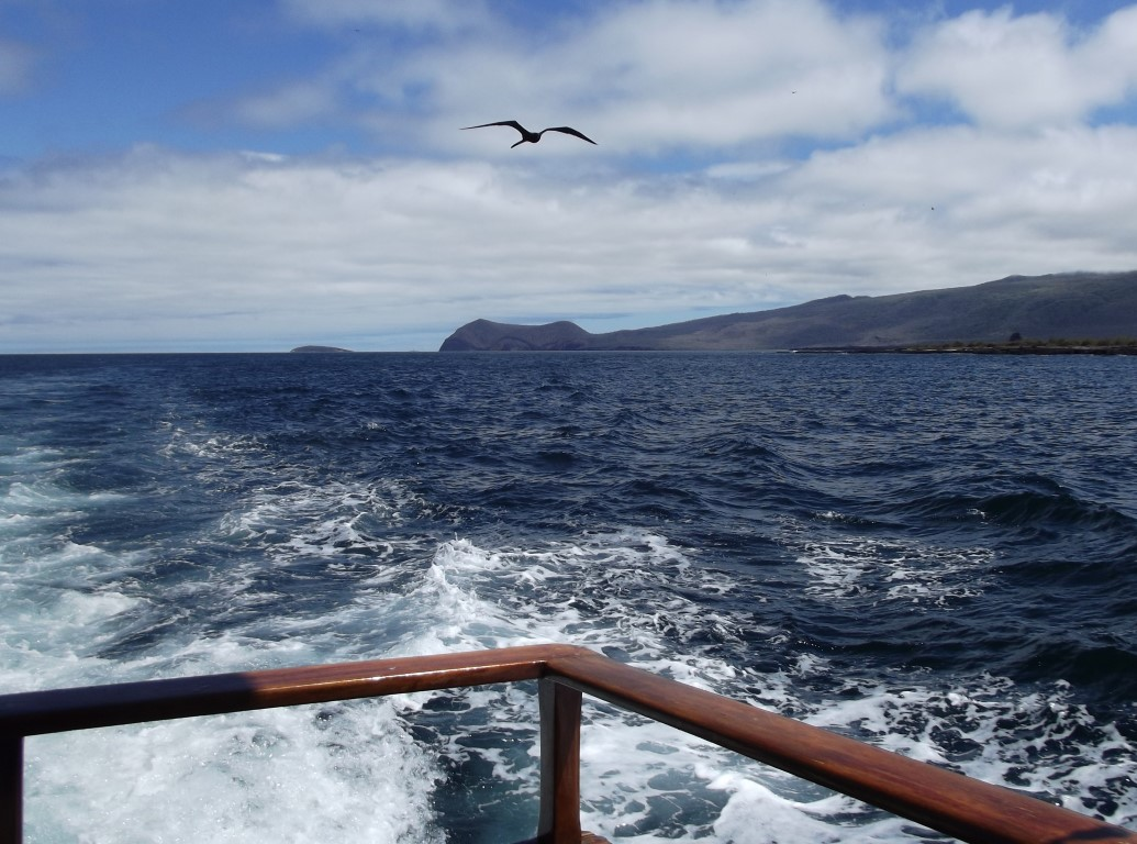View from stern of boat with bird following