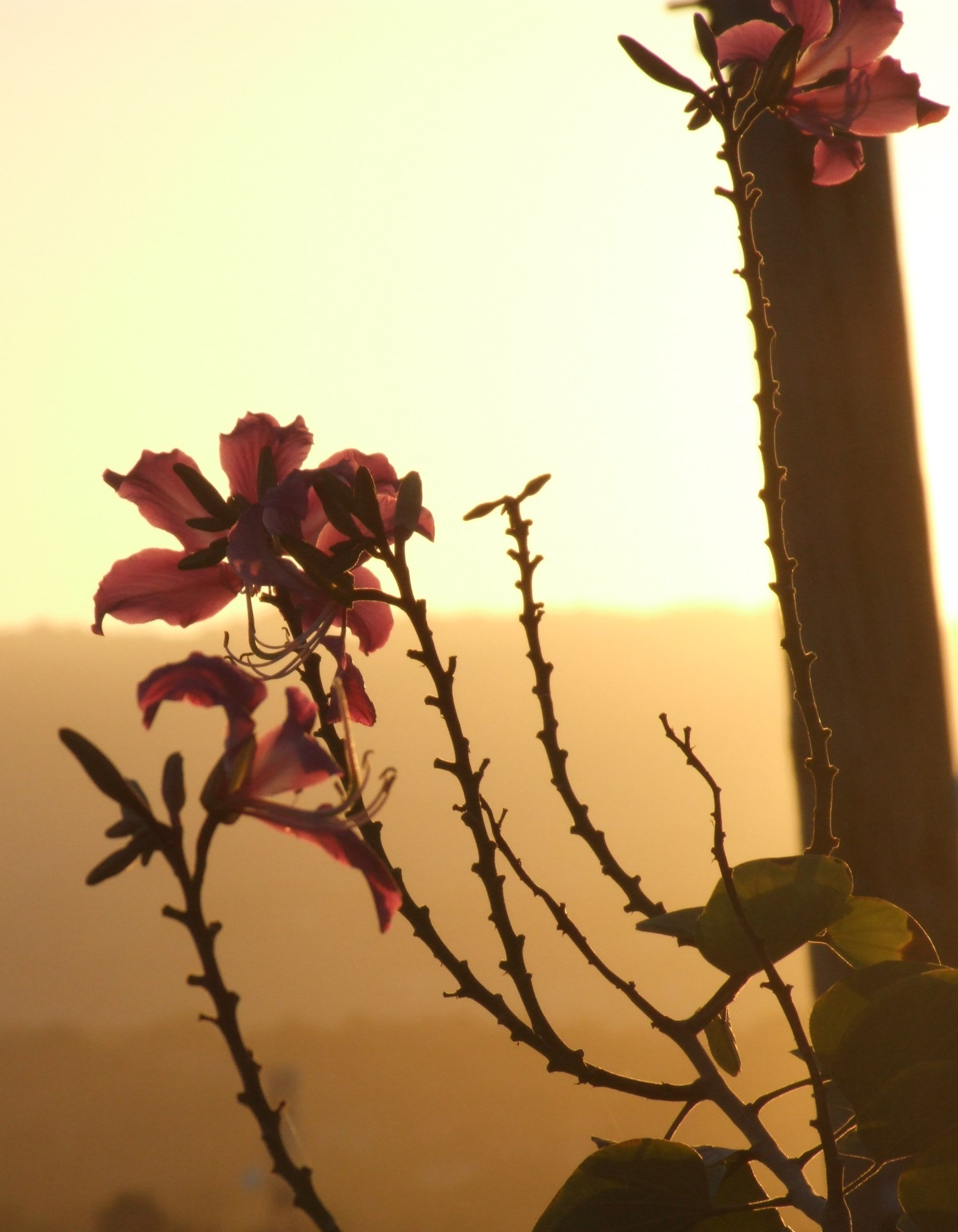 Misty sunset with flowers in foreground