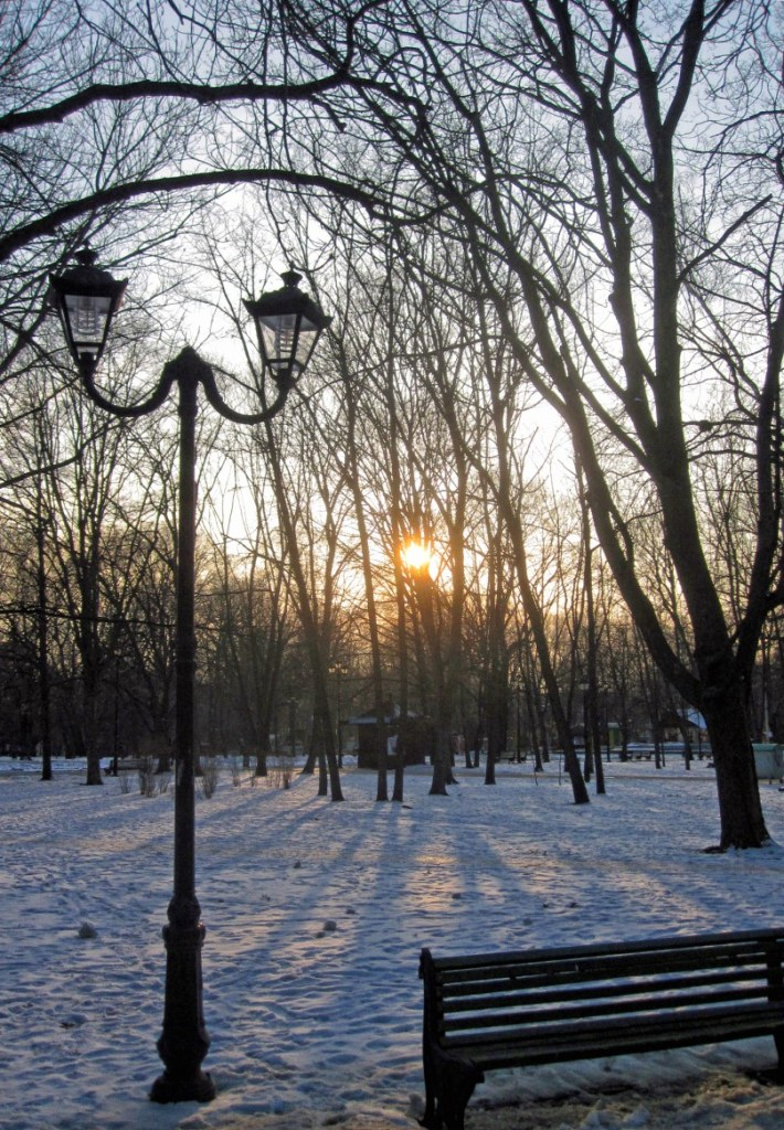 Snowy park with low sunlight