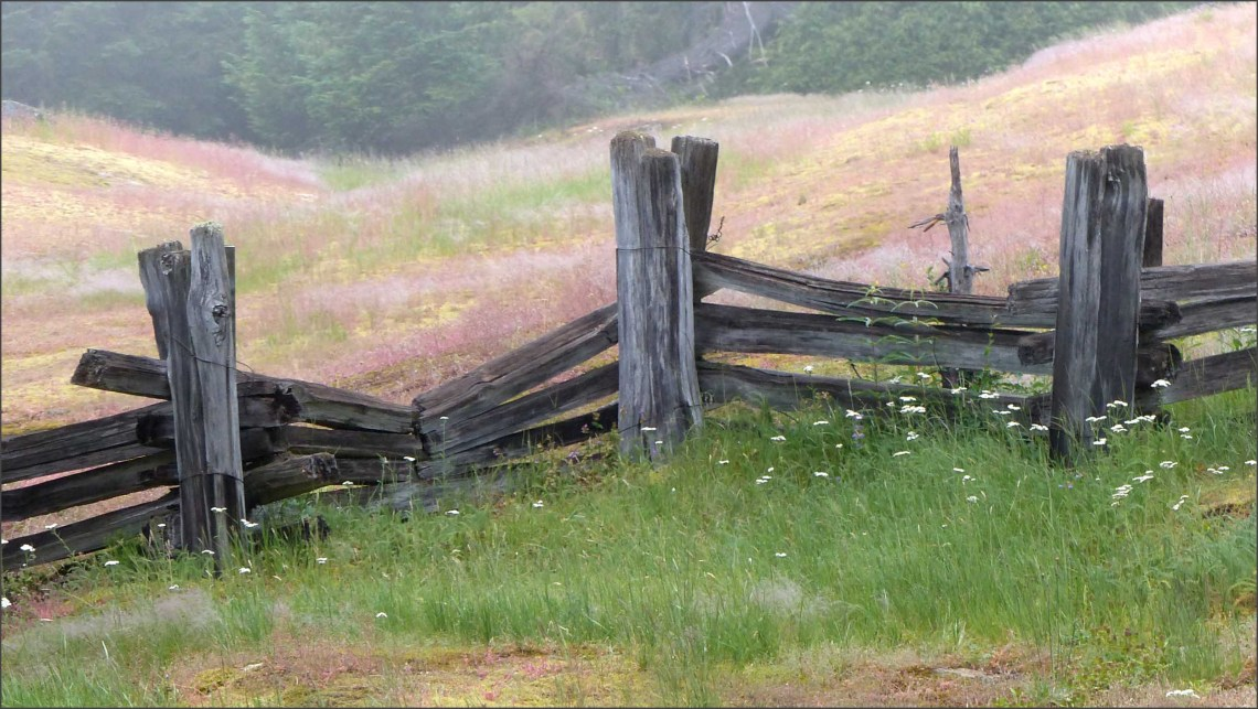 Rough wooden fence