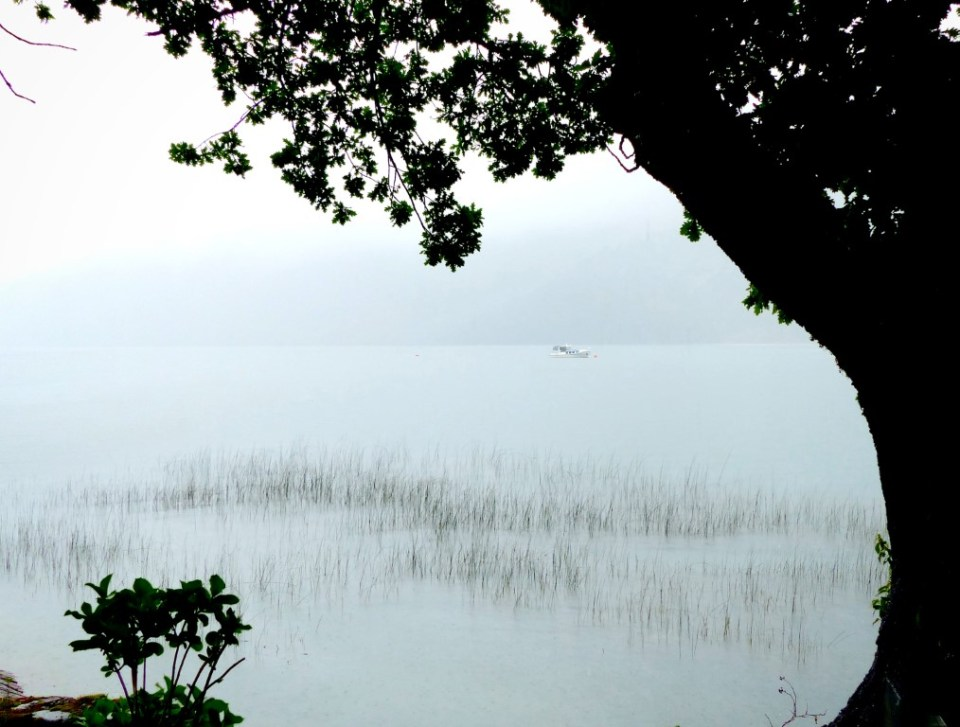 Lake framed by large tree