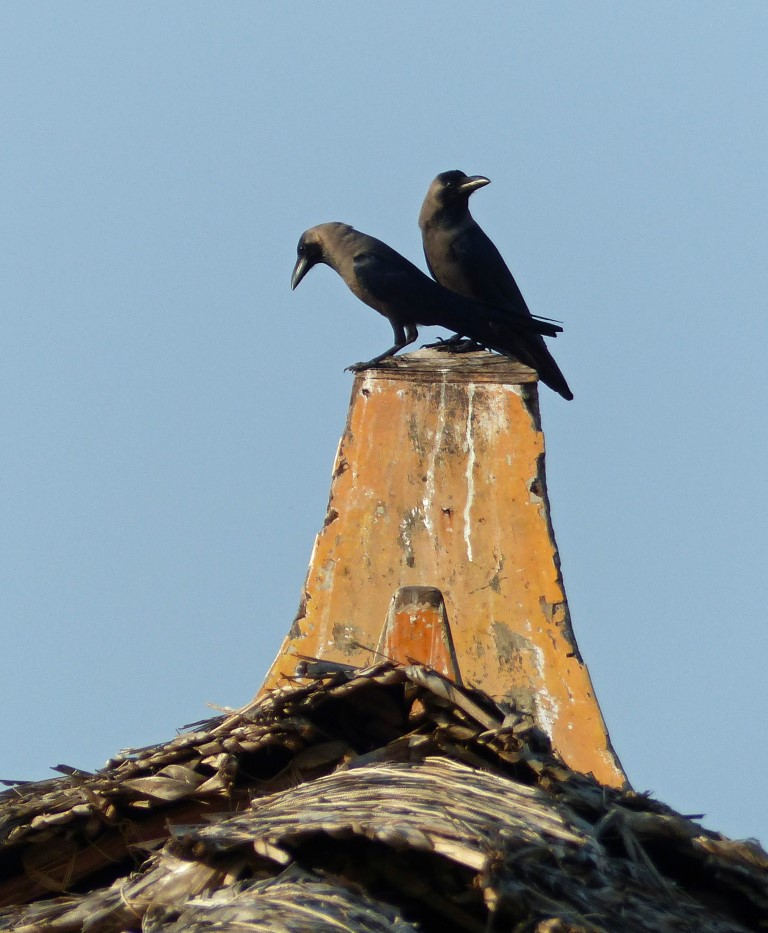 Two black birds on the wooden prow of a boat