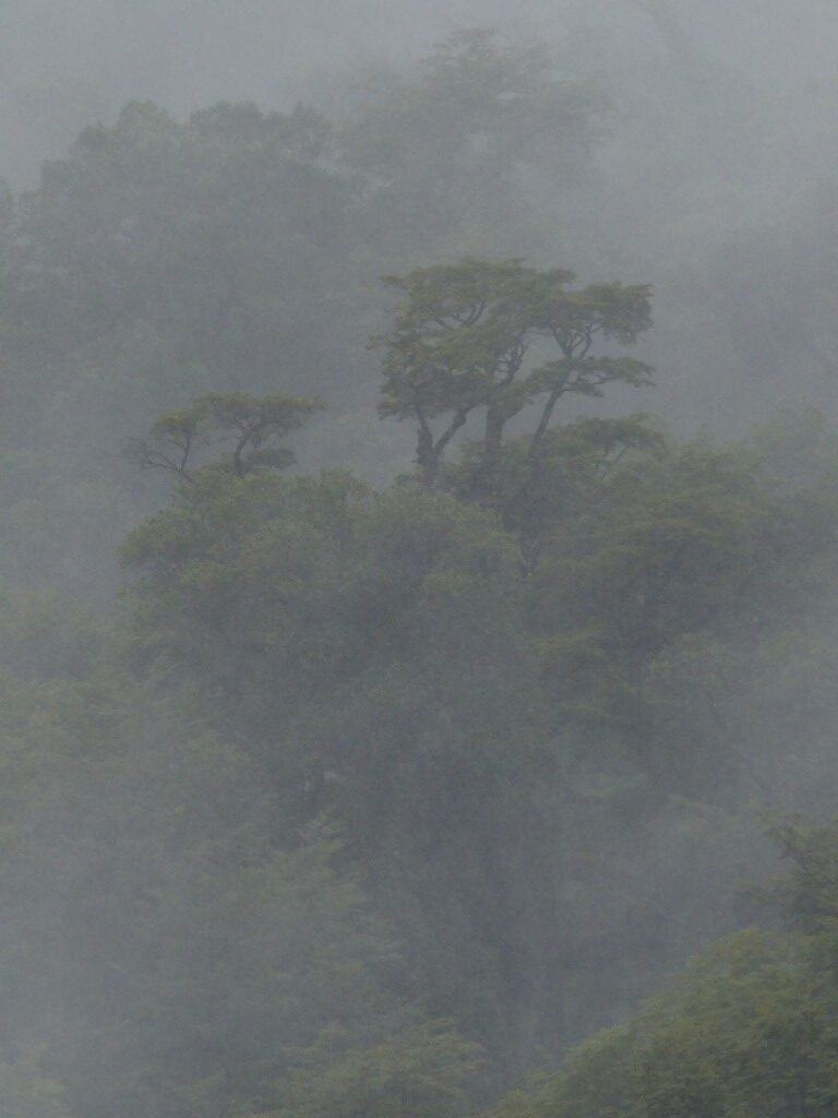 Misty view of trees on a hillside