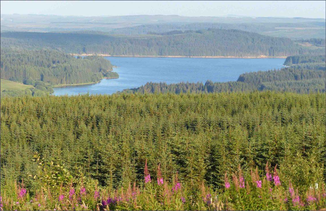 Lake set among pine forests