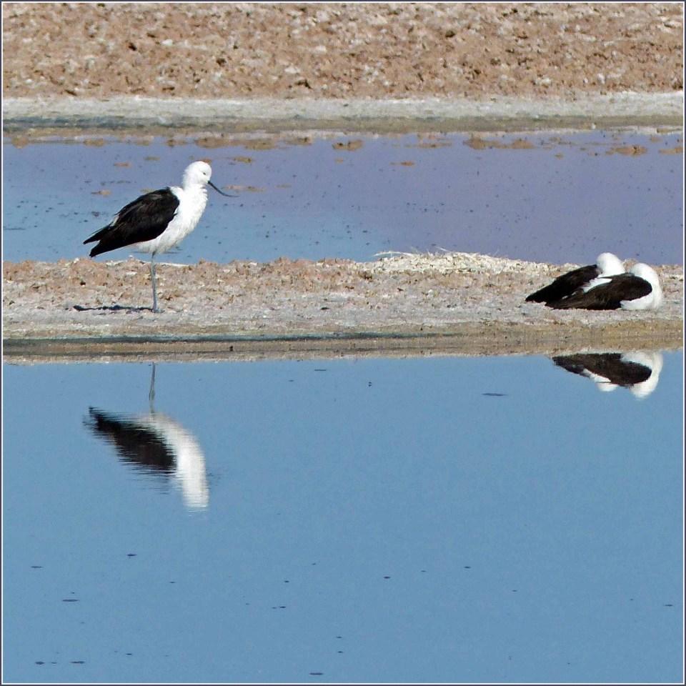 Black and white birds on a sandbank