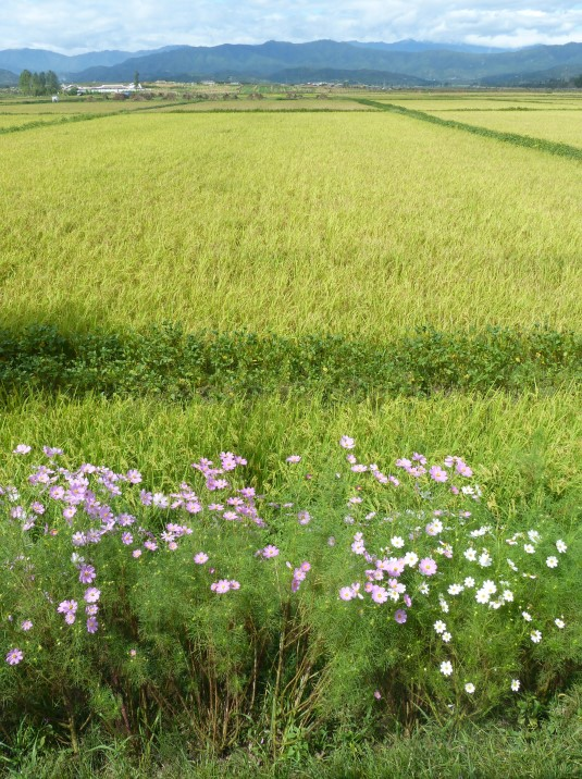 Pink flowers and green fields