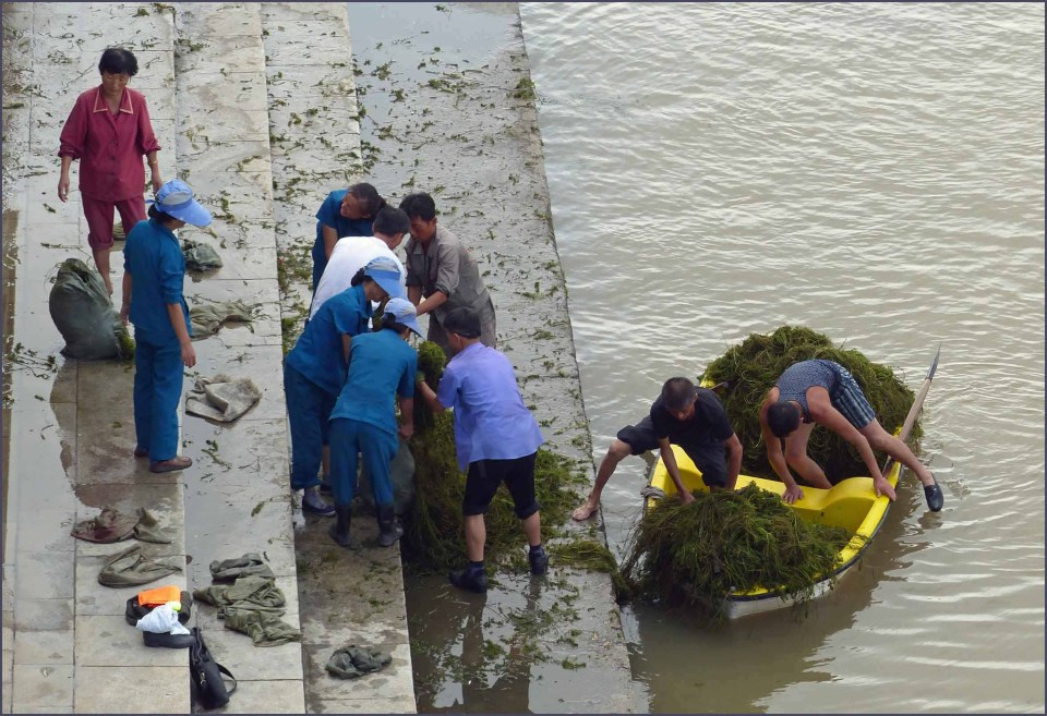 Men unloading green weed from a small boat