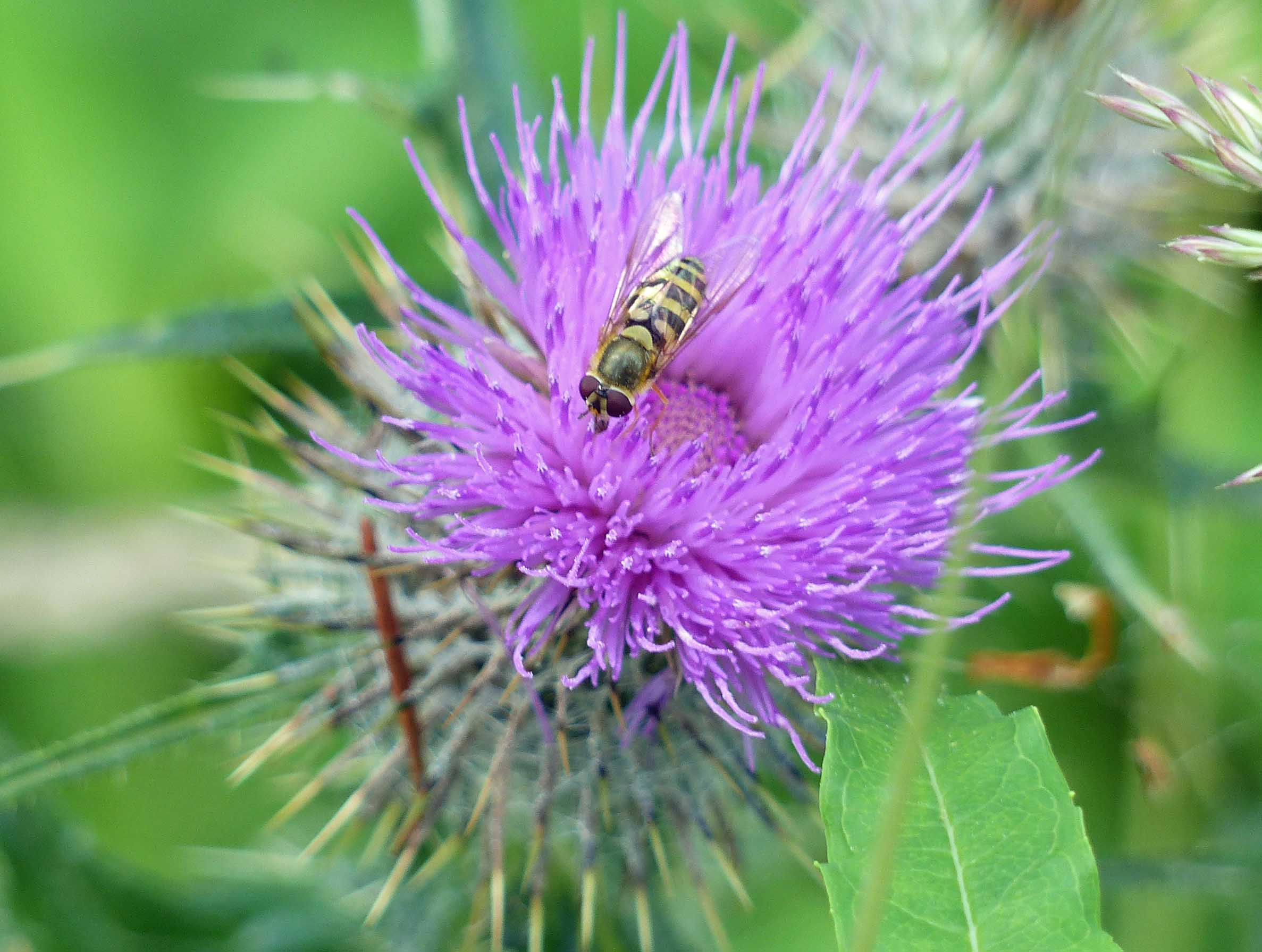 Purple flower with small bee