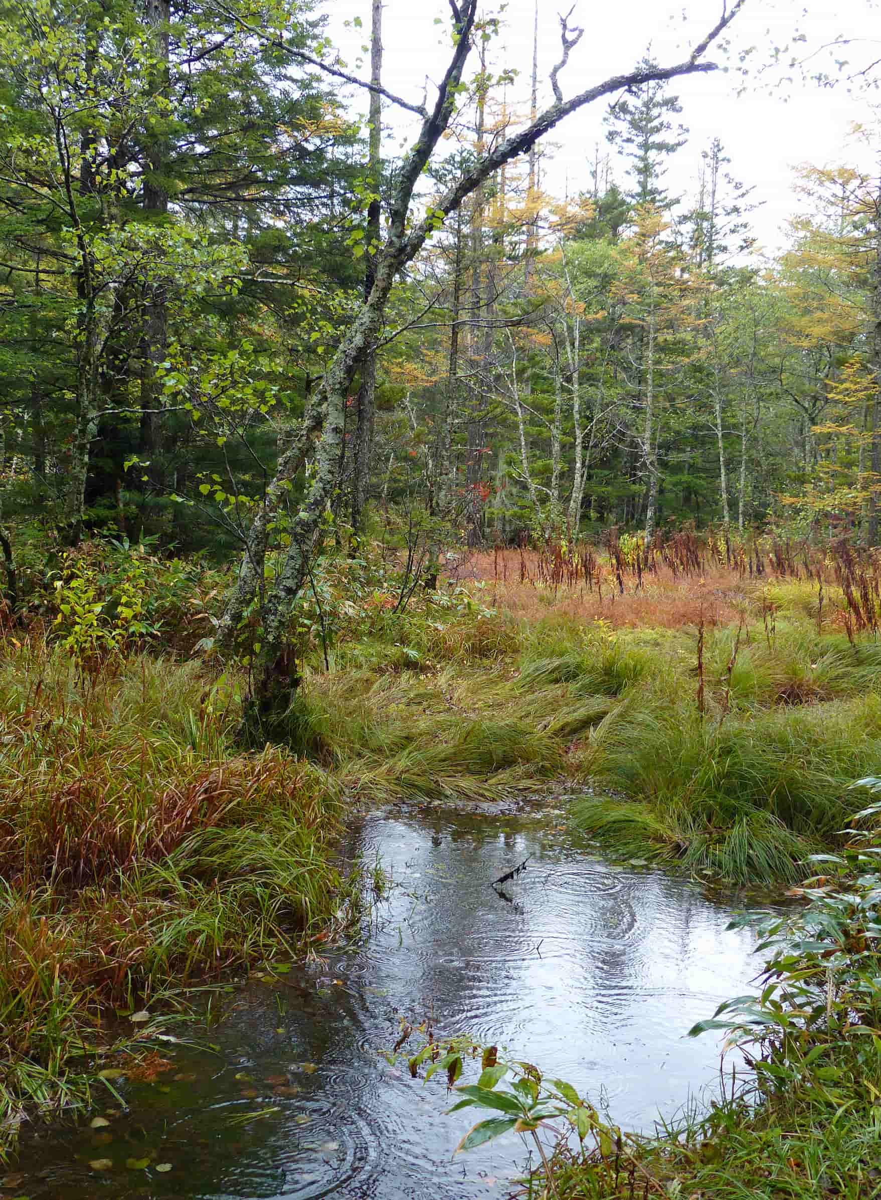 Small stream through a wood