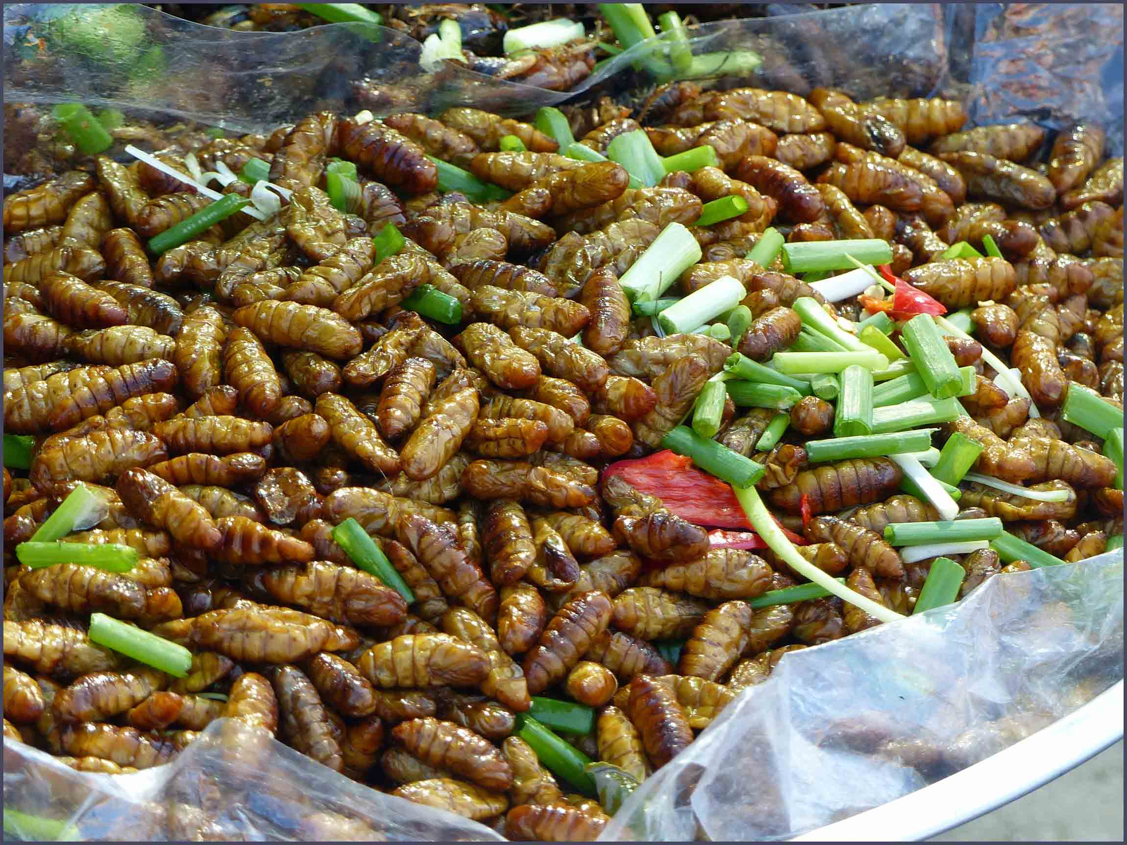 Bag of fried cocoons