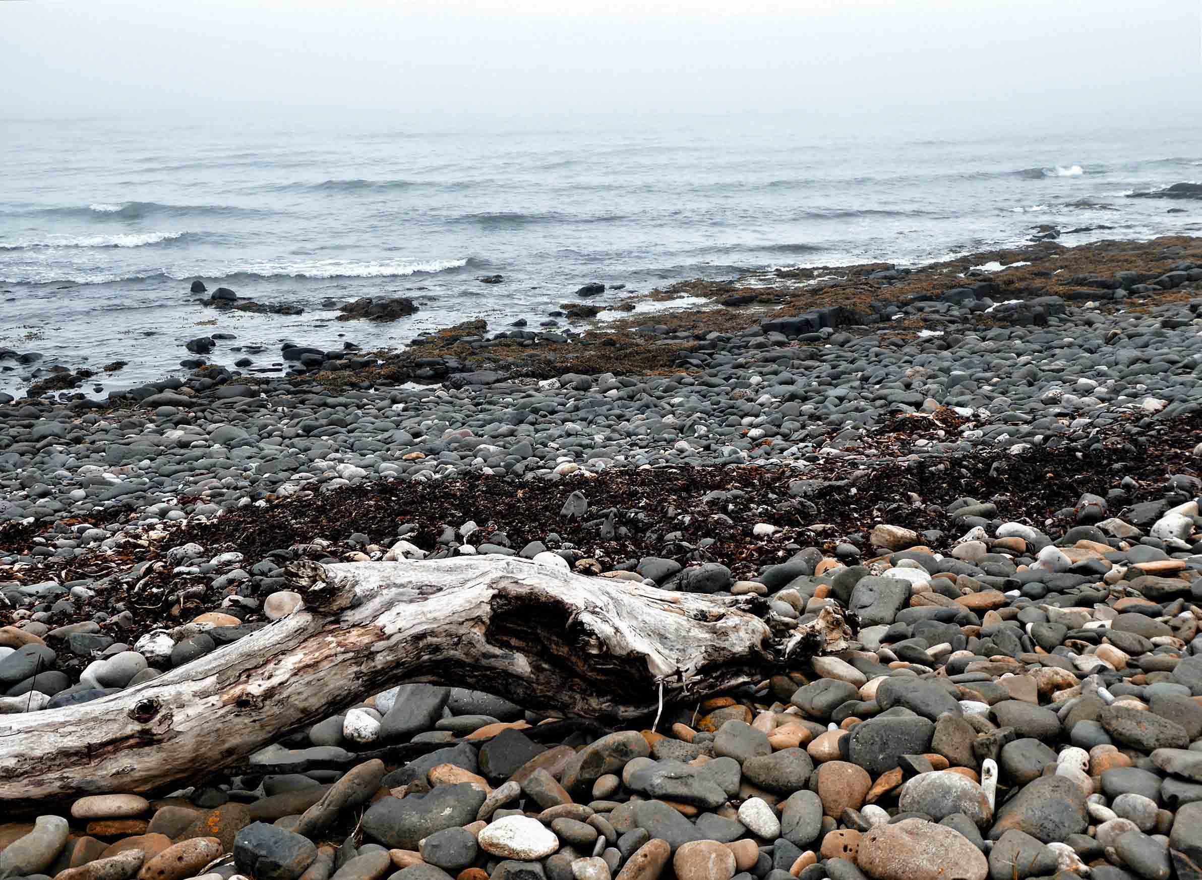 Stony beach and driftwood