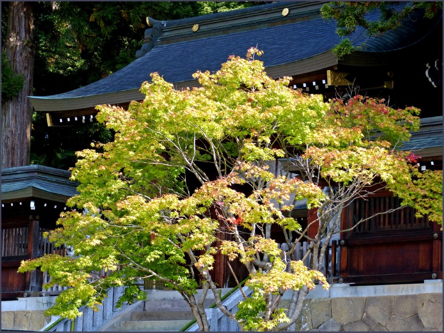 Tree in front of Buddhist shrine