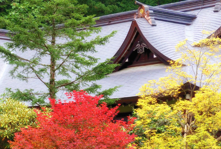 Autumn trees in front of Buddhist shrine