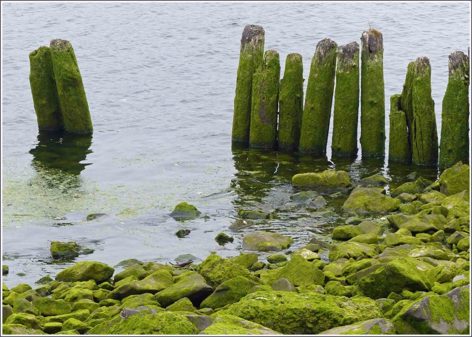 Remains of old wooden jetty with green lichen