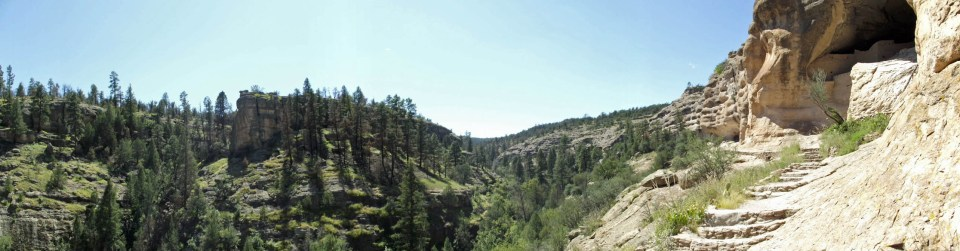 Panorama of valley with pine trees