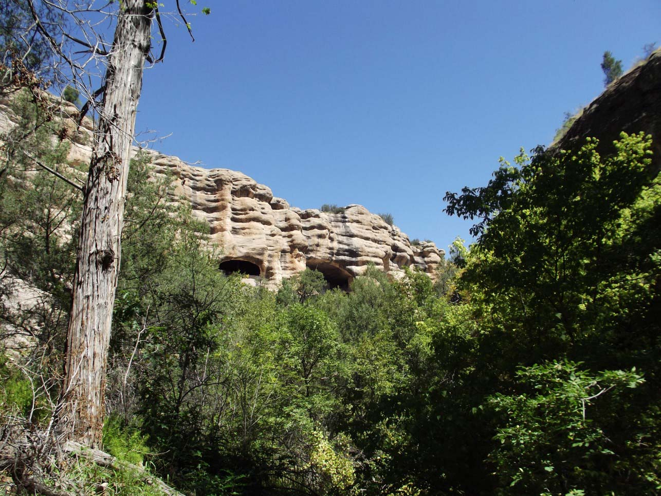 View of caves above some trees