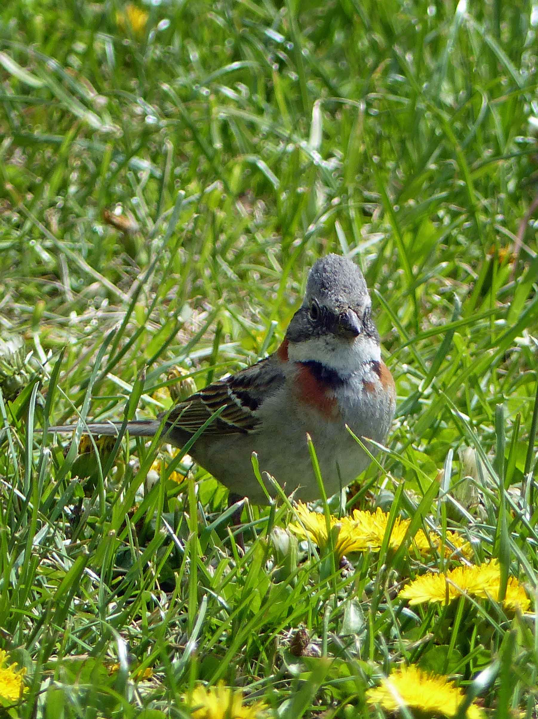 Brown bird in the grass