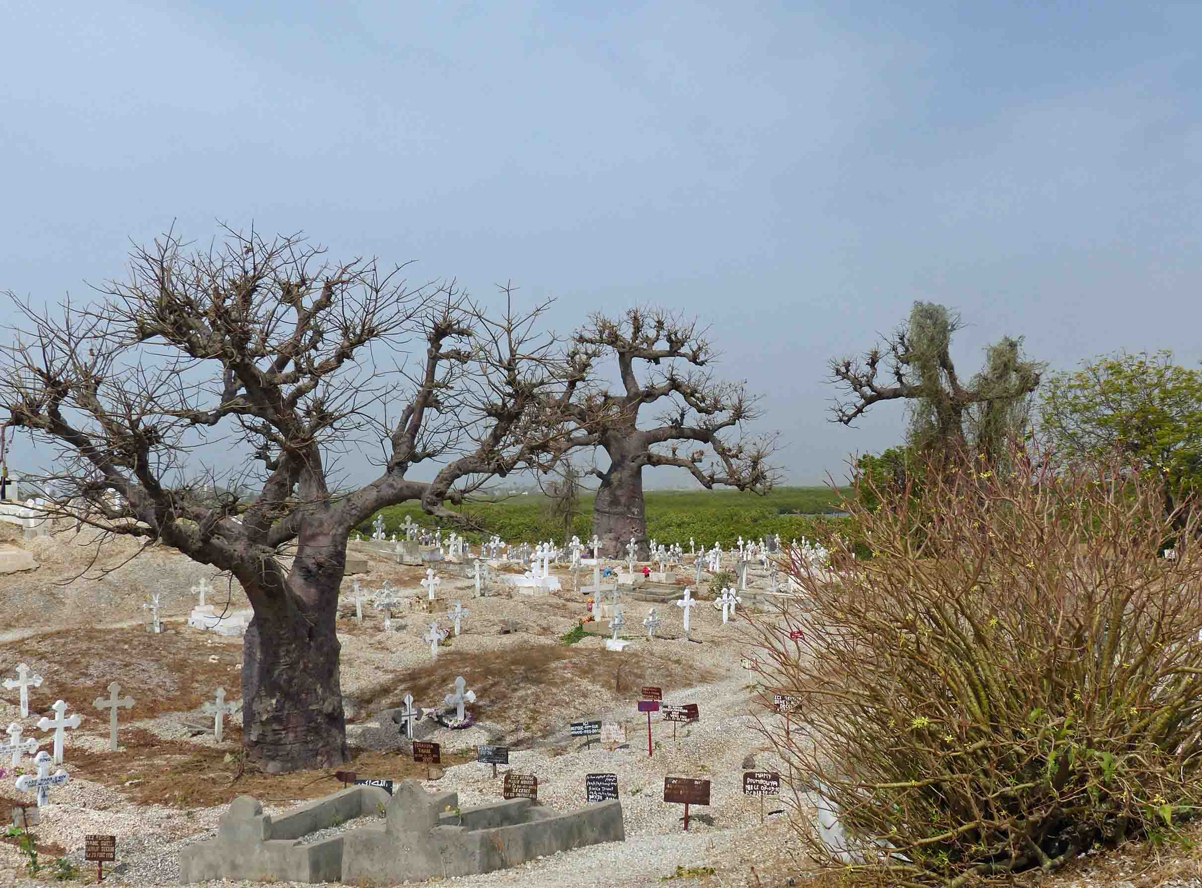 Cemetery on an island with banyan trees