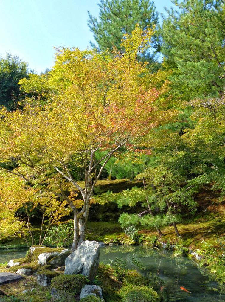 Japanese garden with autumn colour