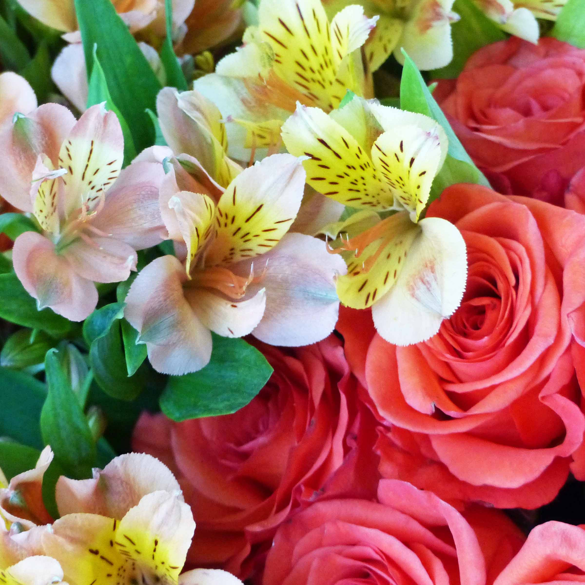 Red and cream flowers