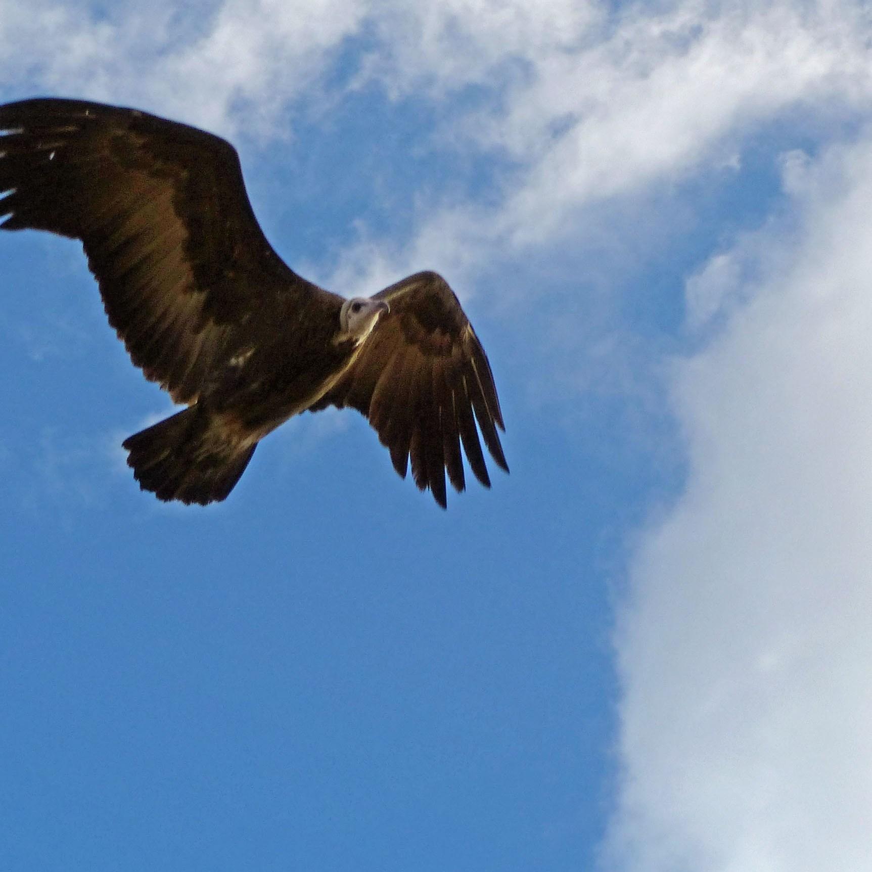 Bird flying overhead