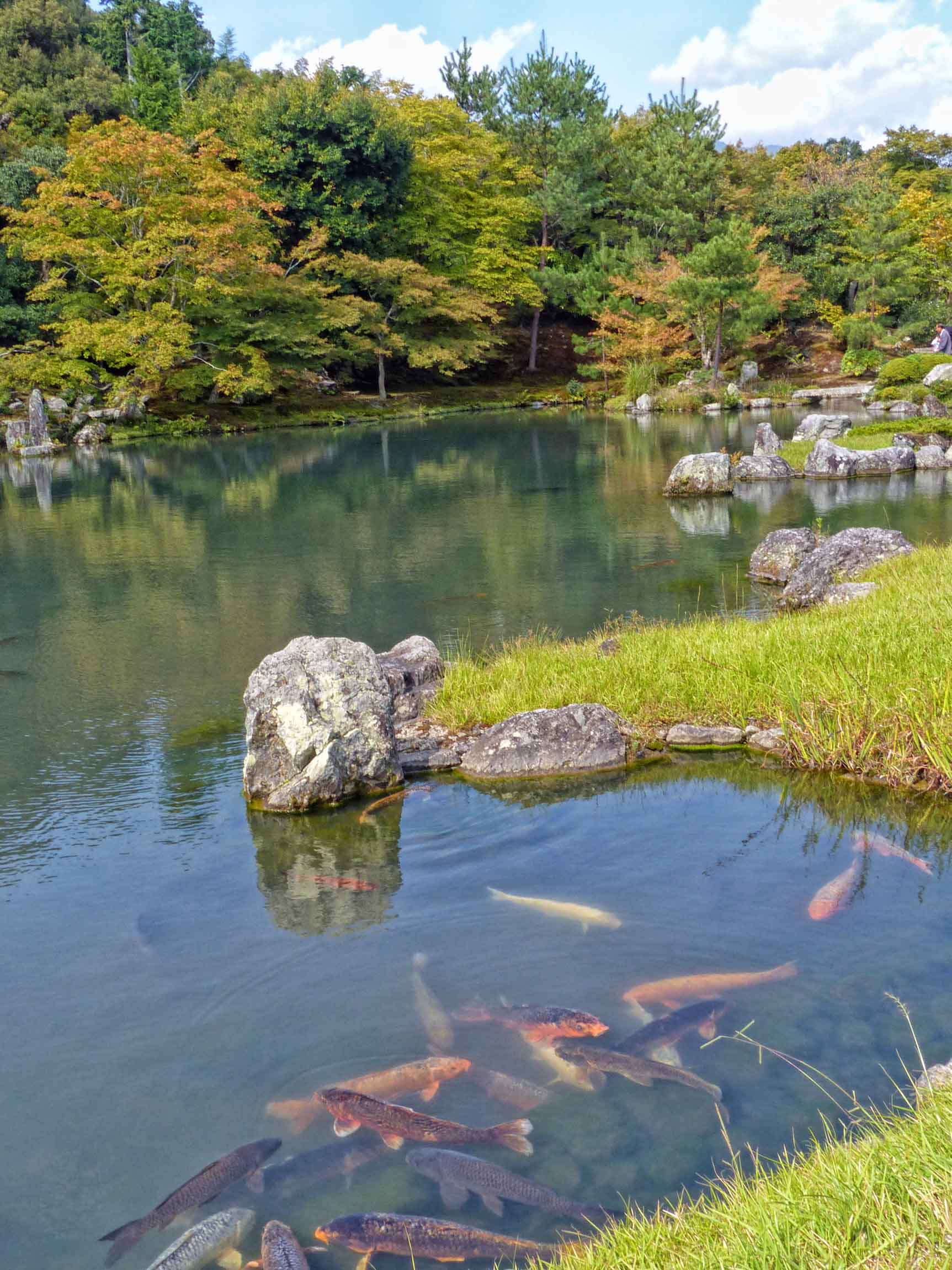 Japanese garden with ponds and carp