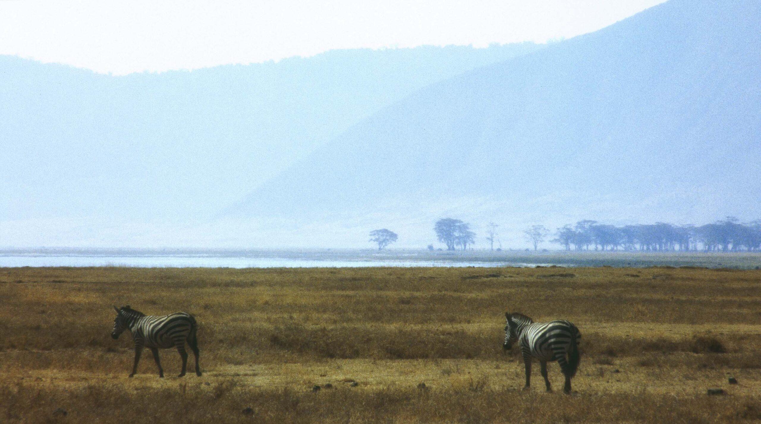 Two zebras with hazy hills beyond