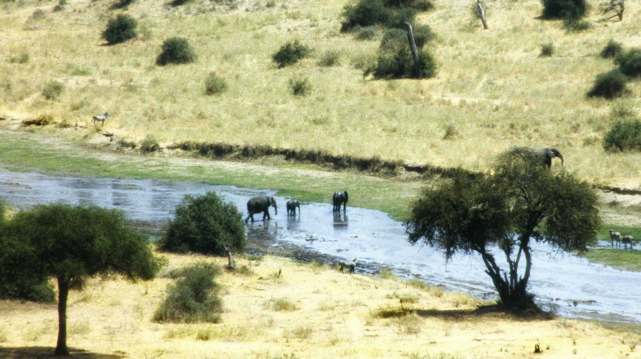 Looking down at a river with three elephants