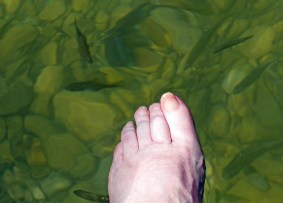 Foot in green water with fishes