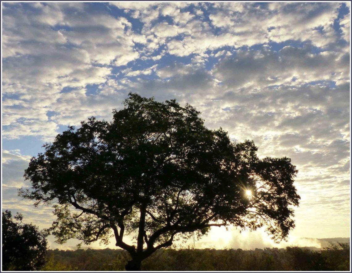 Tree with dramatic sky