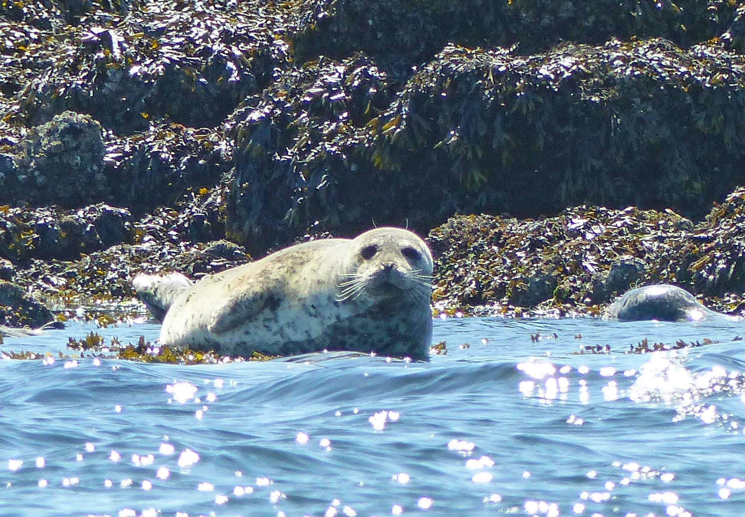 Seal by the water's edge
