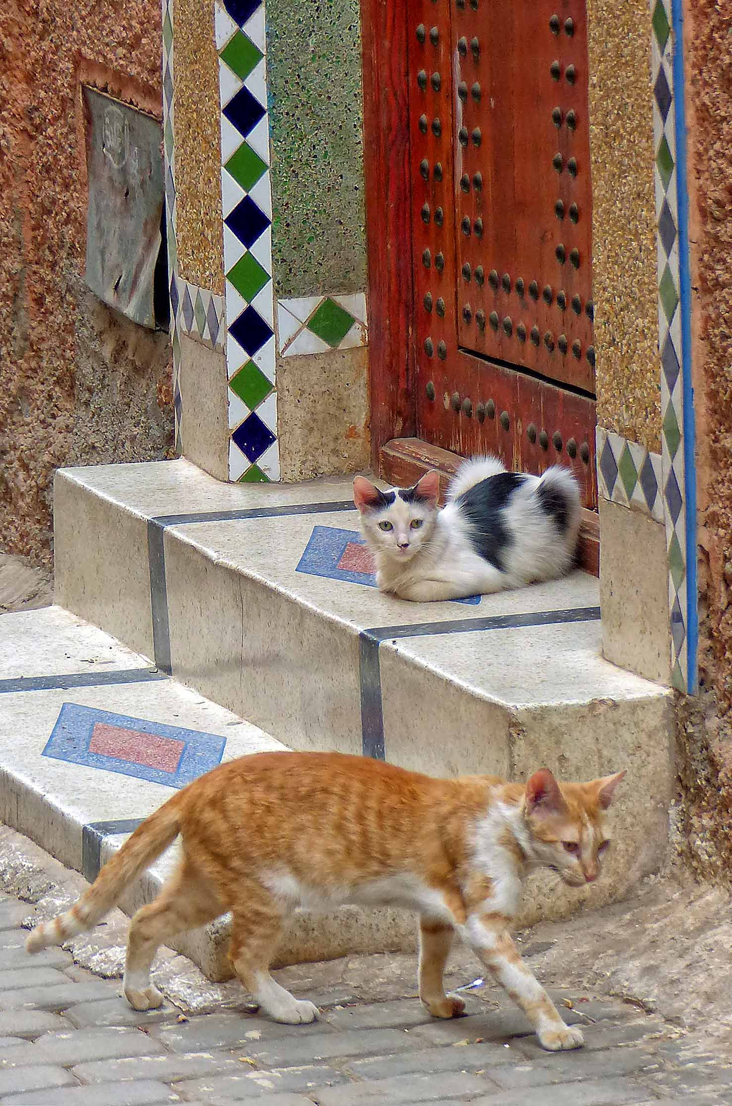 Doorstep with two cats