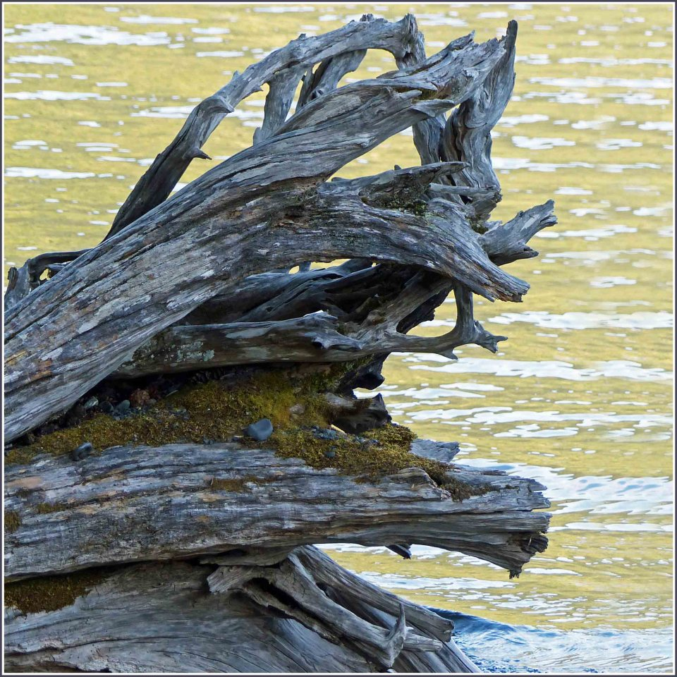 Battered tree trunk with sparkling water behind