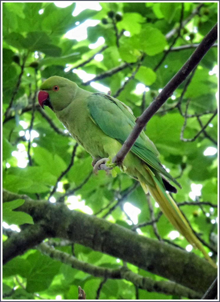 Green parrot in a leafy tree