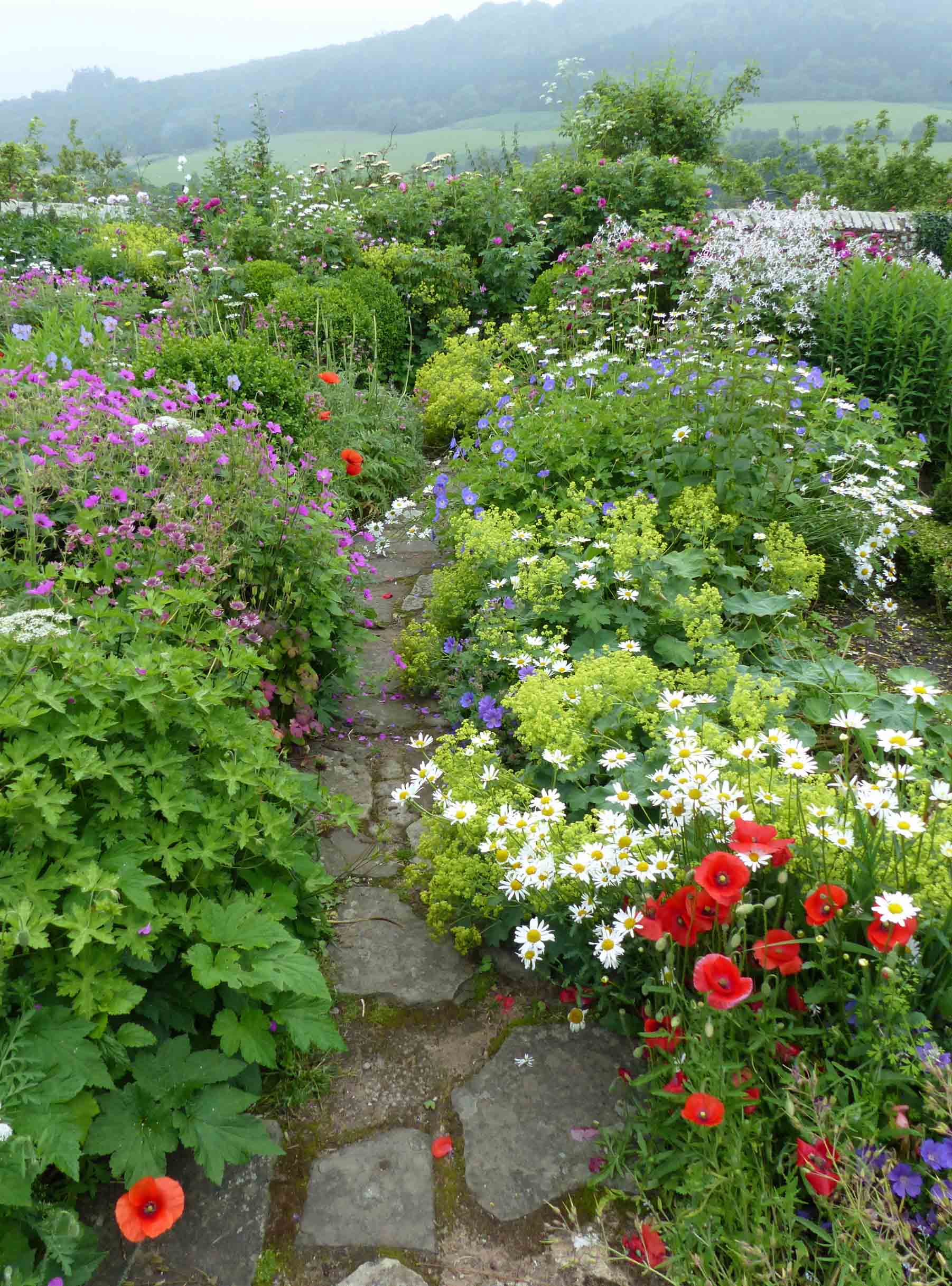 Stone path between flowers and shrubs