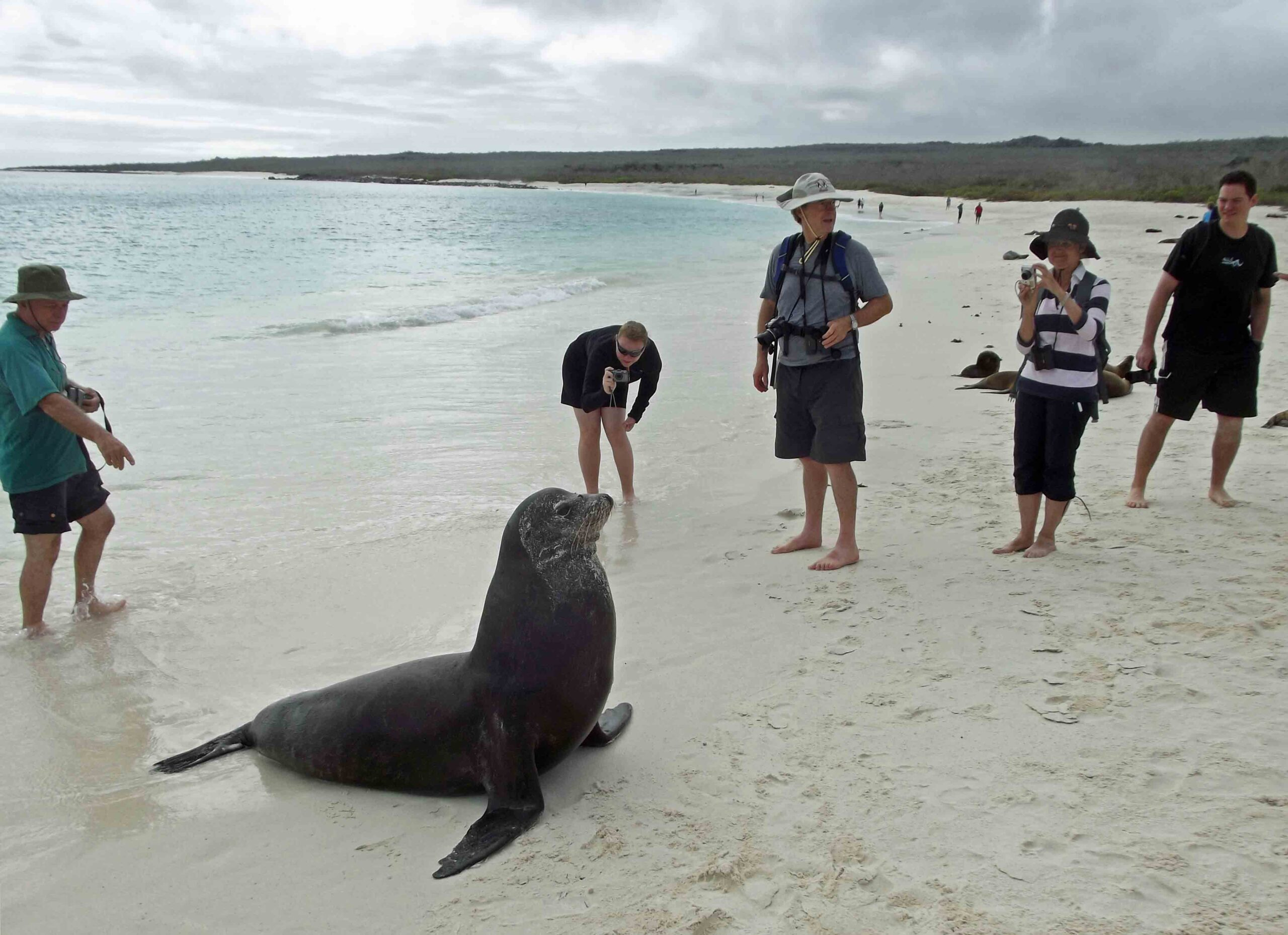 Large seal and small group of people on a beach