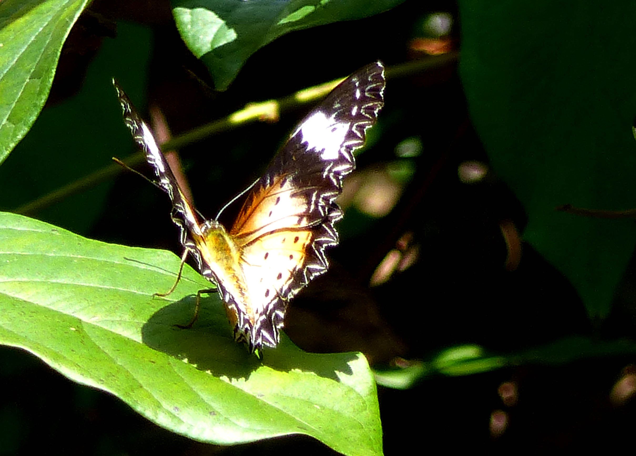 Butterfly on a bright green leaf