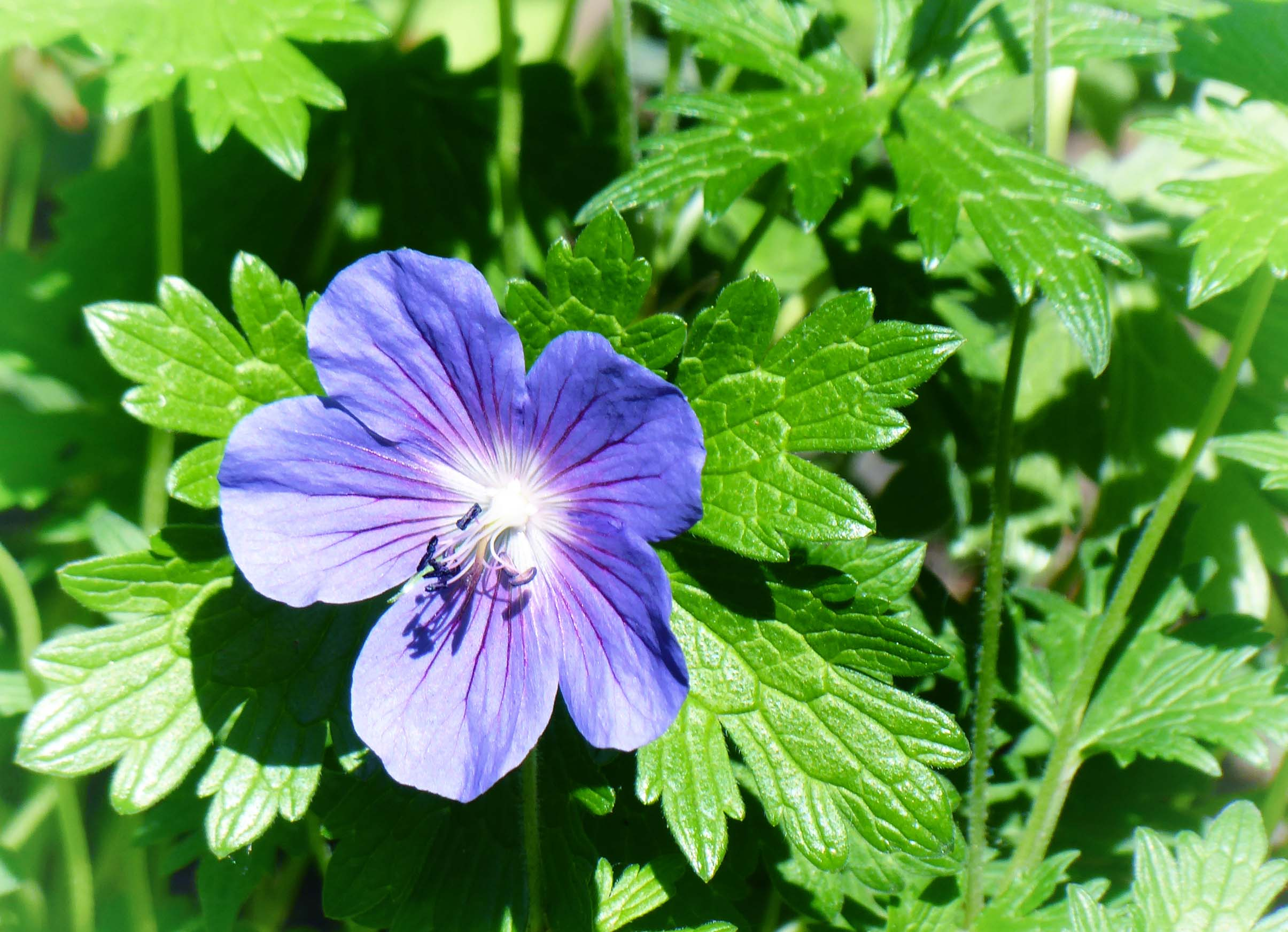 Mauve flower and green leaves