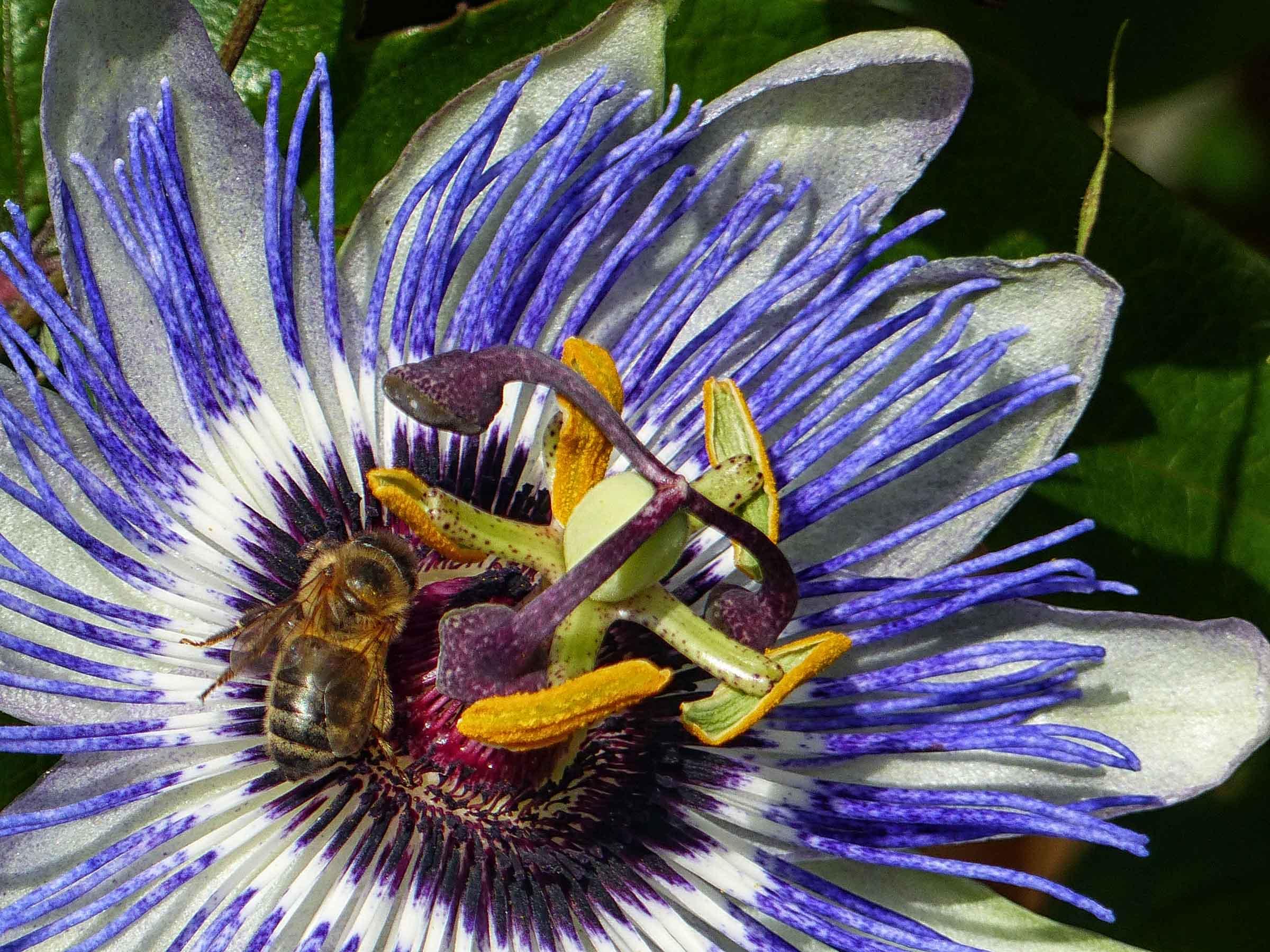 Bee on vivid purple flower