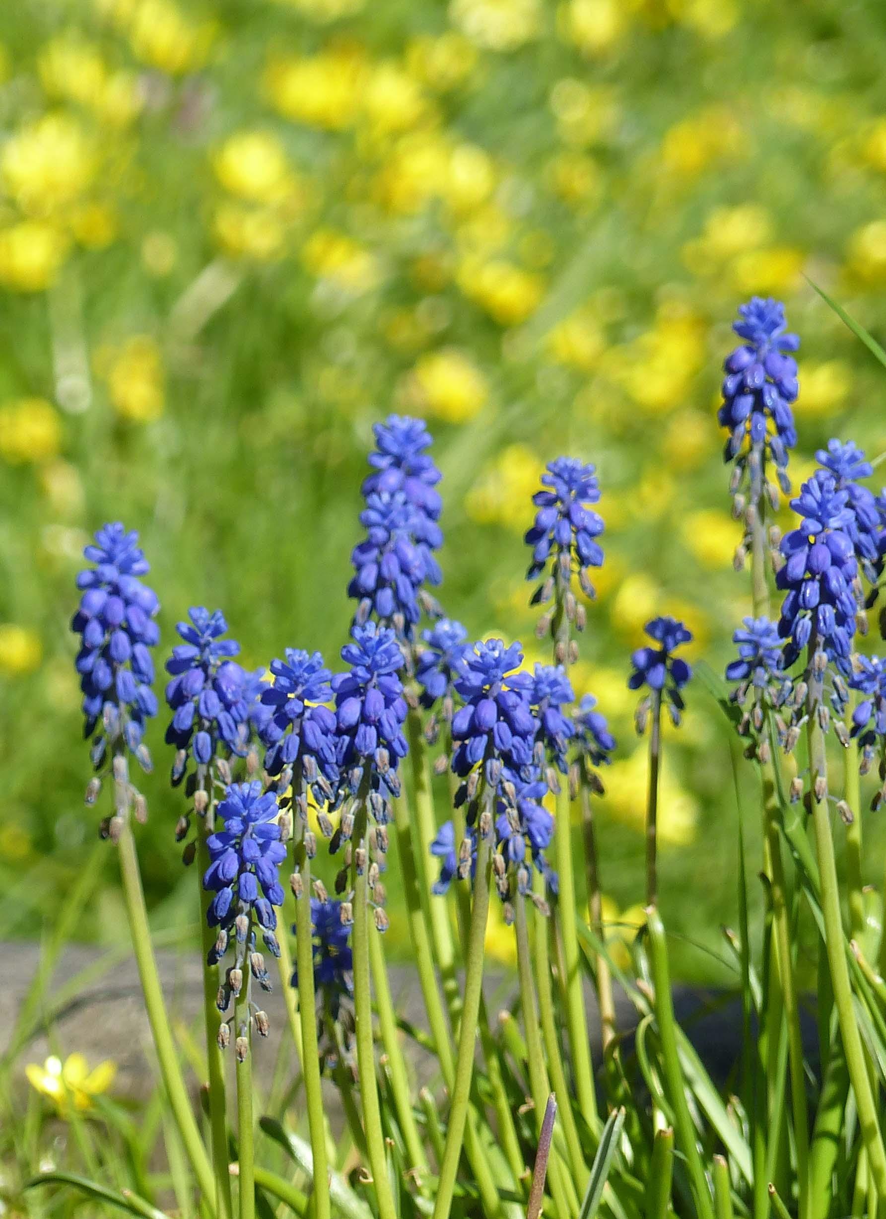 Small blue/mauve flowers