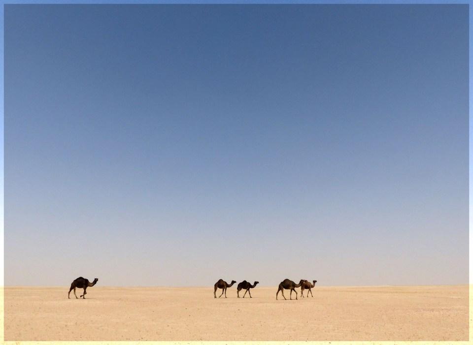 Five dark camels in a desert