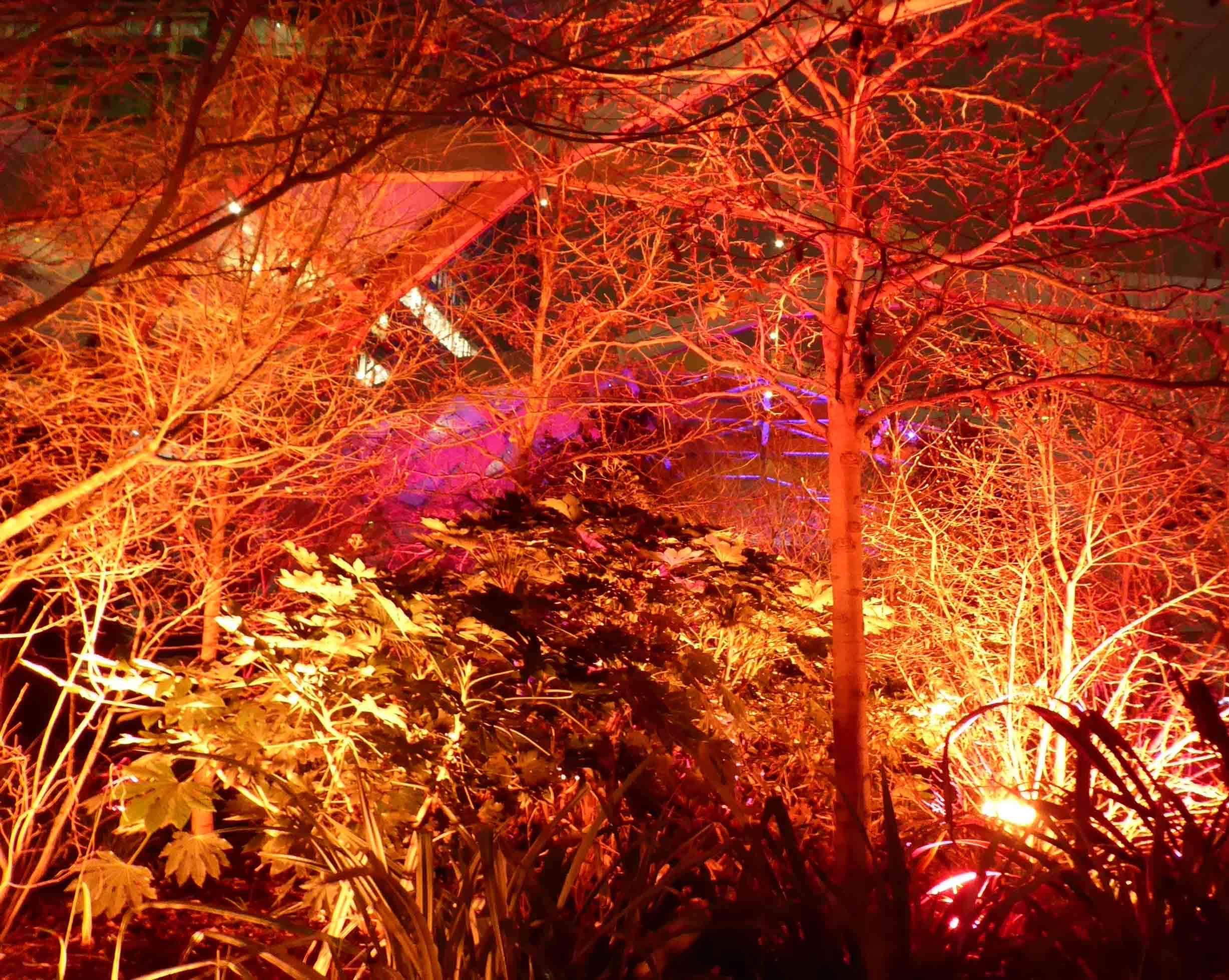 Bare trees illuminated in orange