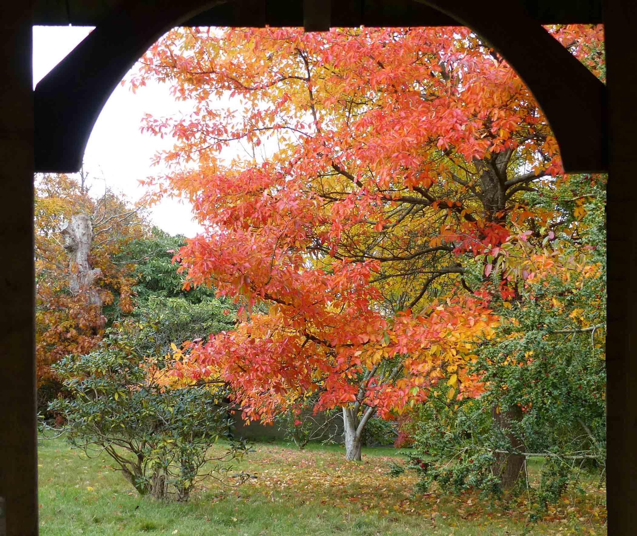 Autumn trees seen through an arch