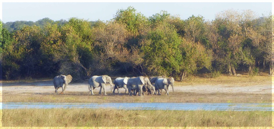 Group of elephants by a river with dry grass and a line of trees