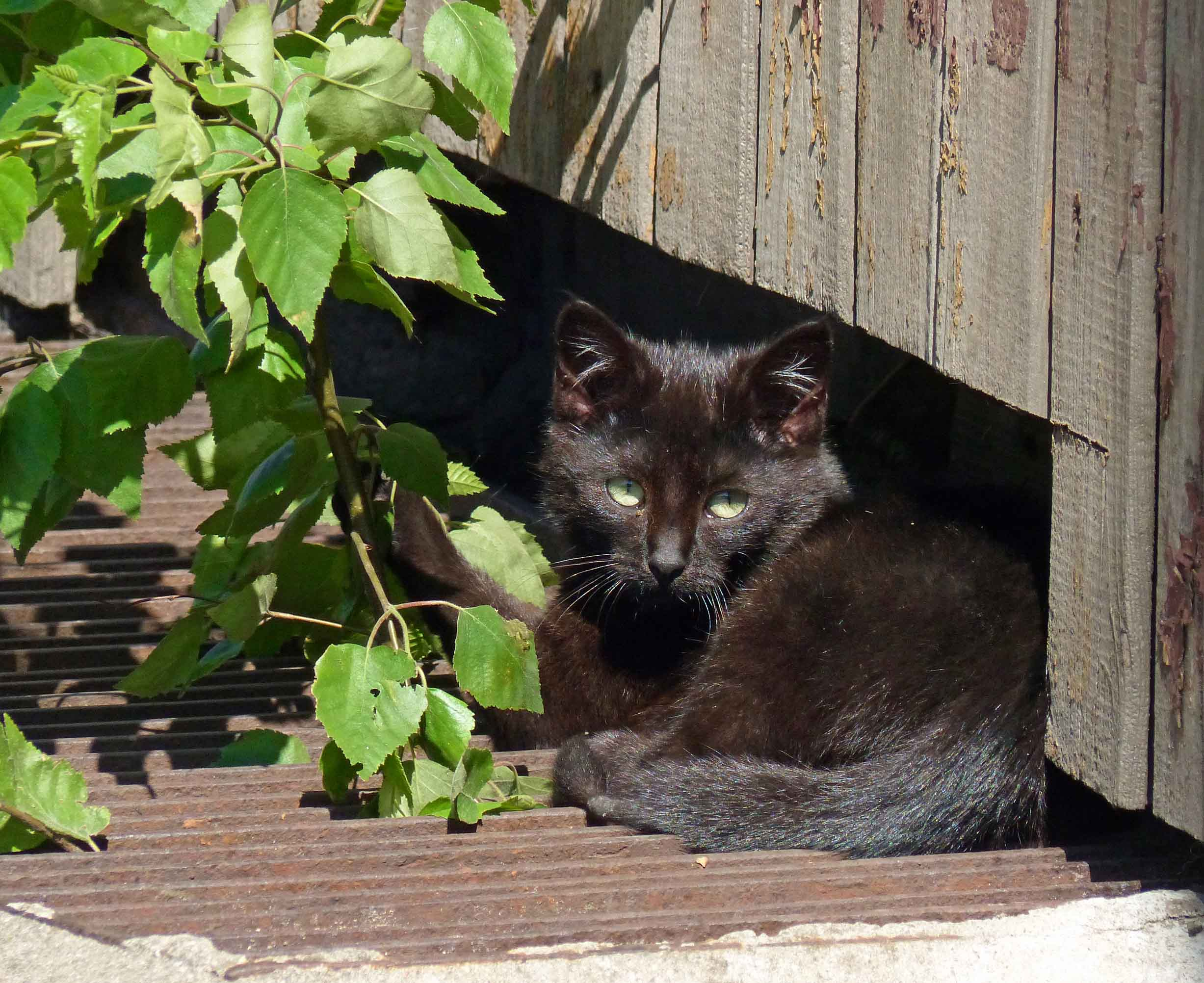 Small black cat by a fence