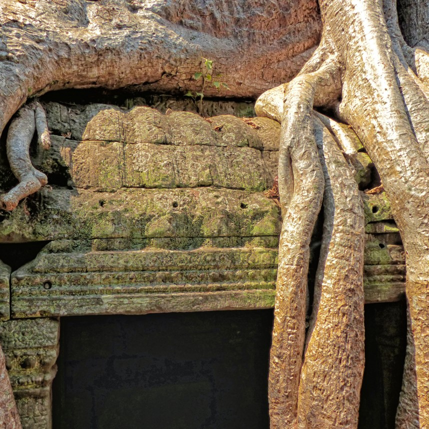 Carved stone ruined doorway with tree roots
