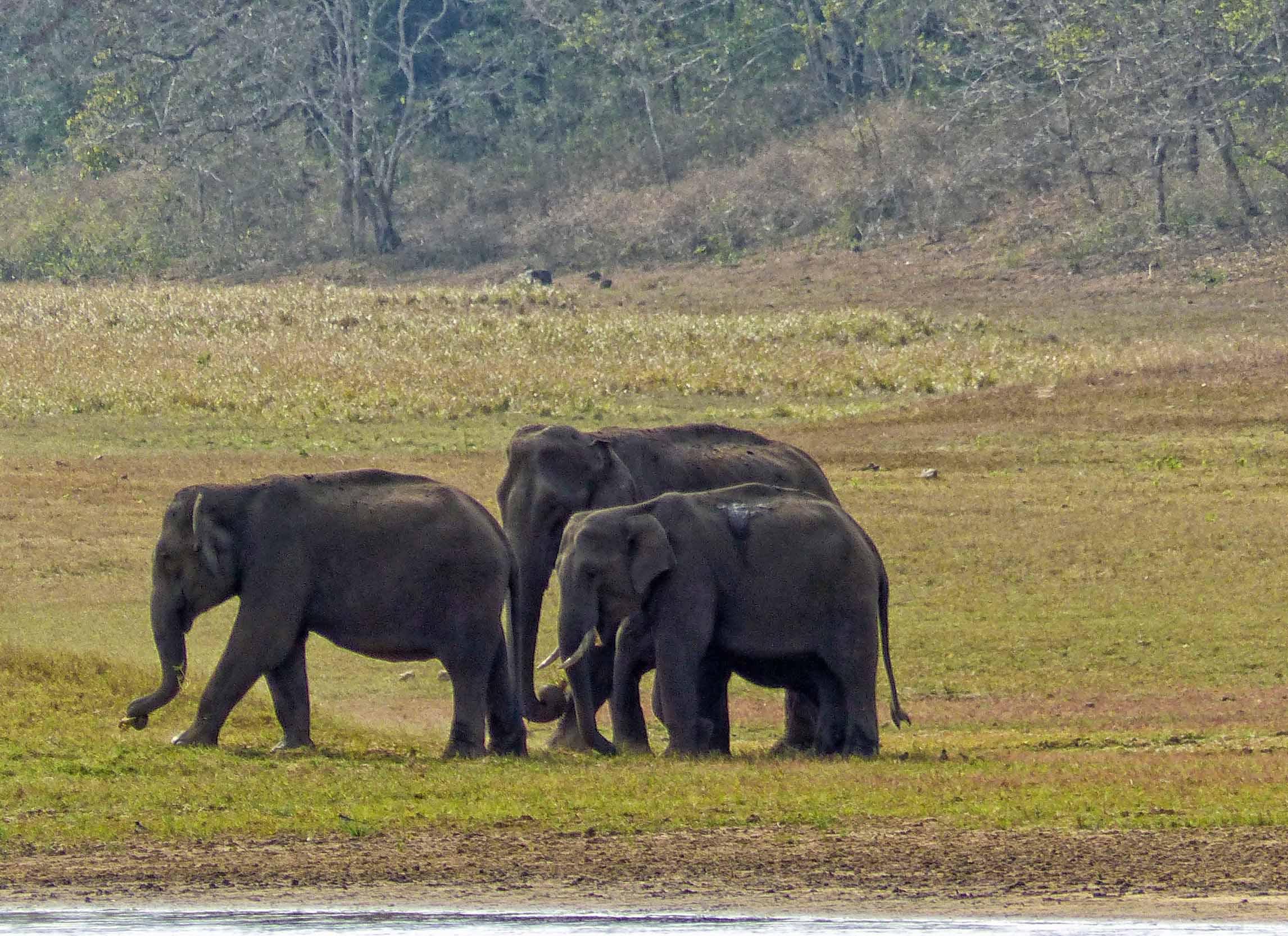 Group of three elephants